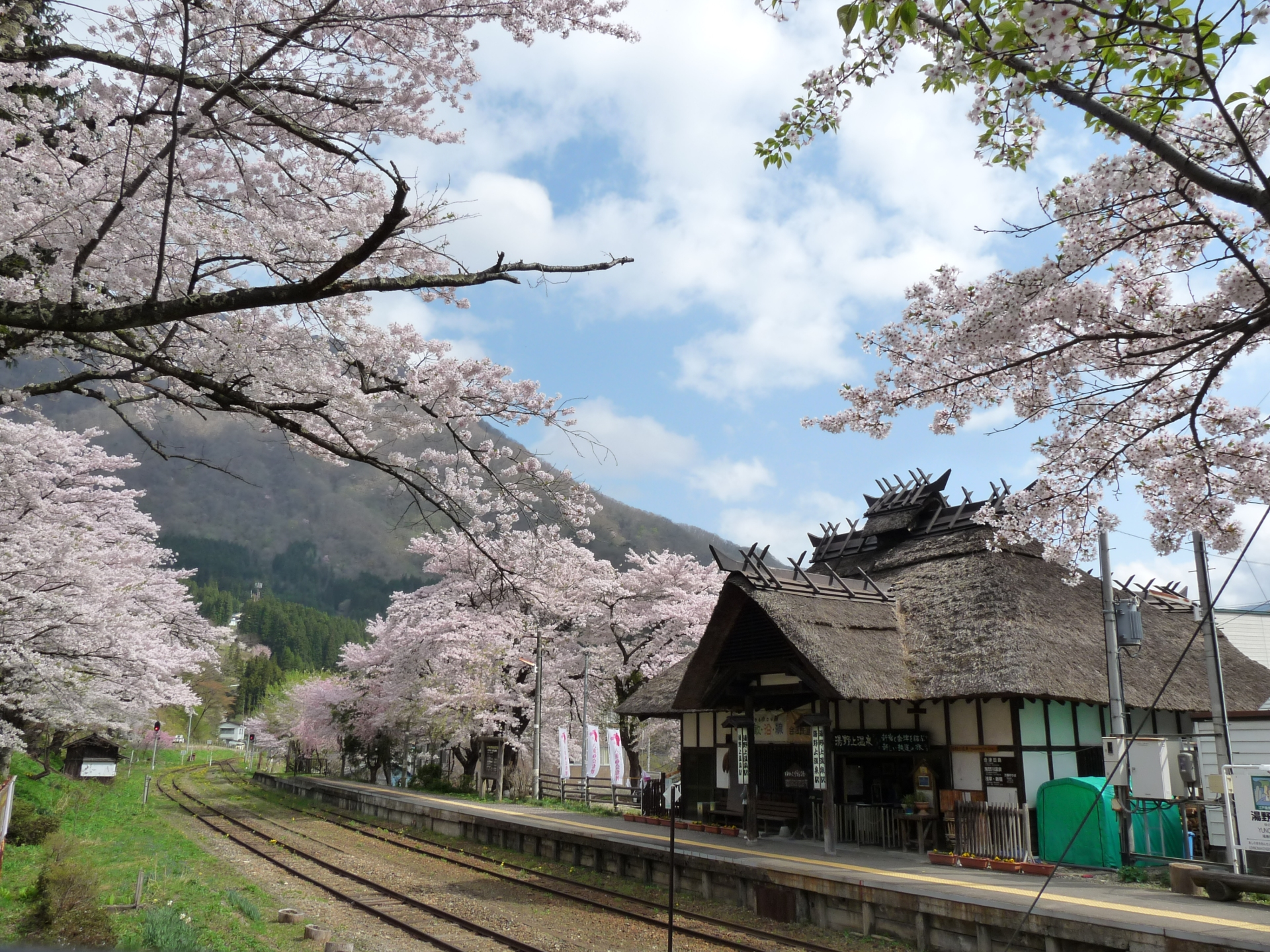 Cherry blossoms and a thatched station in Fukushima