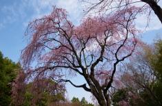 In Tojogaoka History Park