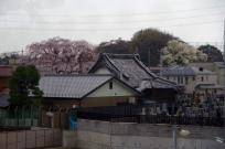 Seeing Dempouji Temple in Higashimasutdo station