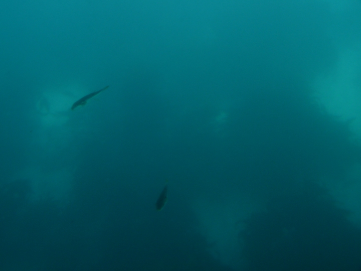The underwater in Tokyo bay