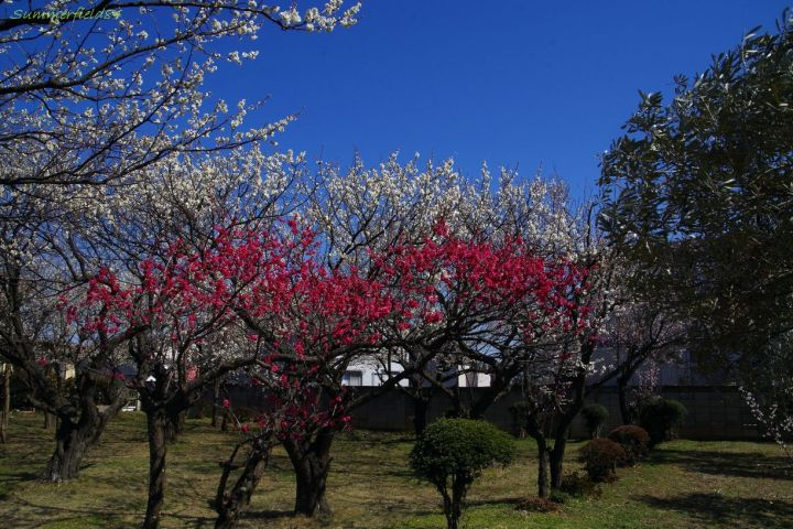 Taken near my house, March, 2014.