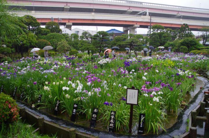 In Horikiri Iris Garden