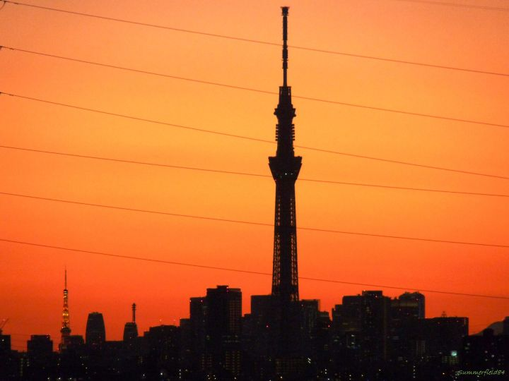 floodlit Tokyo Tower and Shadowed Tokyo Sky Tree and the other buildings