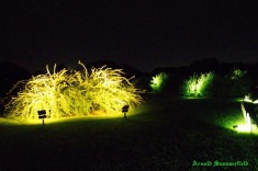 the floodlit thees of Japanese clover in Kairaku-en